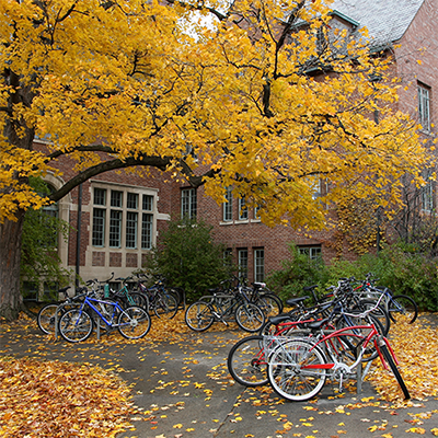 College campus in the fall, with bicycles parked under a tree.